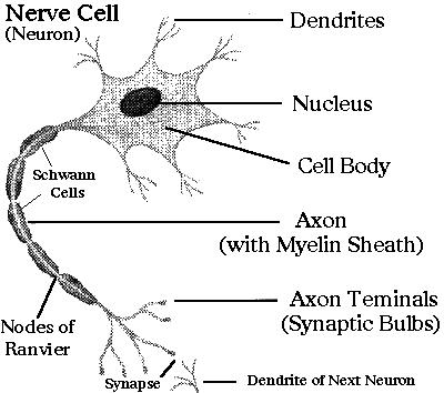 Multiple Sclerosis and diet | DrDobbin Nutrition